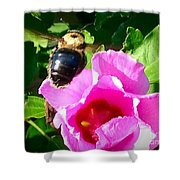 Bumble Bee Flying To Flower Shower Curtain