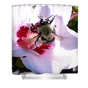 Bumble Bee Making His Escape From Hibiscus Flower Shower Curtain