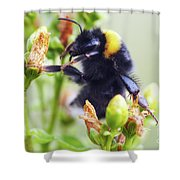 Bumble Bee On Flower Shower Curtain