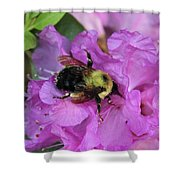 Bumble Bee On Rhododendron Blossoms Shower Curtain
