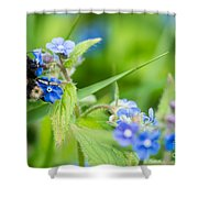 Bumble Bee On Siberian Bugloss Shower Curtain