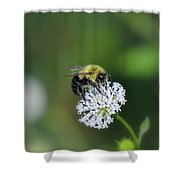 Bumble Bee On White Wild Flower On Banks Of Tennessee River At Shiloh National Military Park Shower Curtain