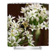 Bumble Bee On Wild Onion Flower Shower Curtain