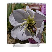 Bumble Bee On Wild Primrose 1 Shower Curtain
