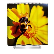 Bumble Bee On Yellow Flower Shower Curtain