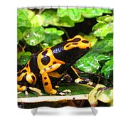 Bumble Bee Poison Frog Shower Curtain