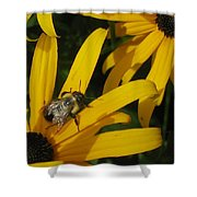 Bumble Bee Sitting On Black-eyed Susan Shower Curtain