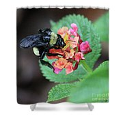 Bumble Bee Square Shower Curtain