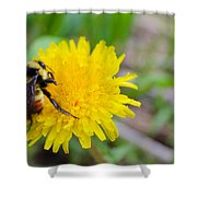 Bumble Bees And Dandelions Shower Curtain
