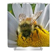 Bumblebee  Shower Curtain