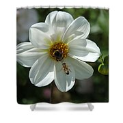 Bumblebee And Bee Shower Curtain