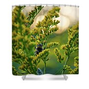 Bumblebee And Canadian Goldenrod 15 Shower Curtain