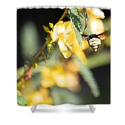 Bumblebee Heading Into Work Shower Curtain