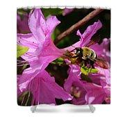 Bumblebee In Azalea Shower Curtain