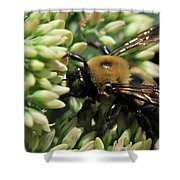 Bumblebee In The Land Of Petals Shower Curtain