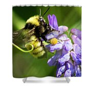 Bumblebee On A Blue Giant Hyssop Shower Curtain