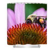 Bumblebee On Coneflower Shower Curtain