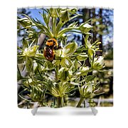 Bumblebee On Elkweed Blossoms Shower Curtain