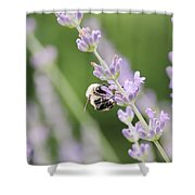 Bumblebee On The Lavender Field 2 Shower Curtain