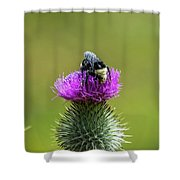 Bumblebee On Thistle Shower Curtain