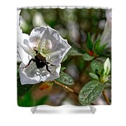 Bumblebee On White Azalea Shower Curtain