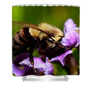 Bumblebee Shower Curtain