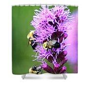 Bumblebees On Liatris Shower Curtain