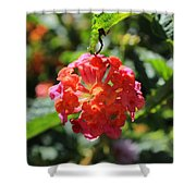 Bunch Of Tiny Flowers Shower Curtain