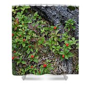 Bunchberry Berries Shower Curtain