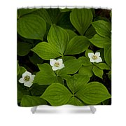 Bunchberry Blossoms Shower Curtain