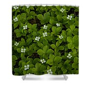 Bunchberry Carpet Shower Curtain