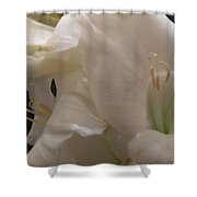 Bundle Of White Shower Curtain