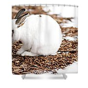 Bunnies Three Shower Curtain
