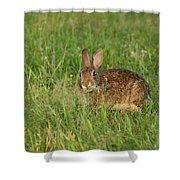 Bunny At Breakfast Shower Curtain