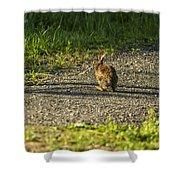 Bunny Eating On The Run Shower Curtain