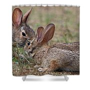 Bunny Encounter Shower Curtain