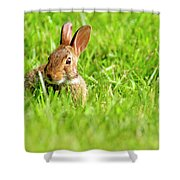 Bunny In Field  Shower Curtain