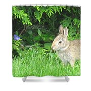 Bunny In Repose Shower Curtain