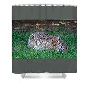 Bunny In The Backyard Shower Curtain