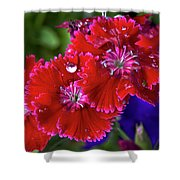 Burgandy Red Dianthus Shower Curtain