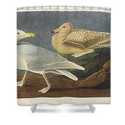 Burgomaster Gull Shower Curtain