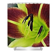 Burgundy And Yellow Lily Shower Curtain