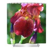 Burgundy Iris Shower Curtain