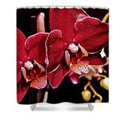 Burgundy Orchids Shower Curtain