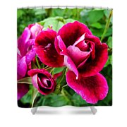 Burgundy Rose And Rose Bud Shower Curtain