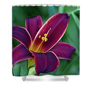 Burgundy Wine Red Daylily Shower Curtain