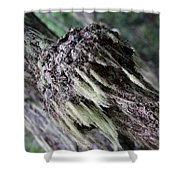 Burl Two Shower Curtain