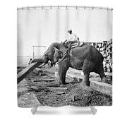 Burma: Elephant Shower Curtain