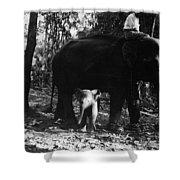 Burma: Elephants, 1960 Shower Curtain
