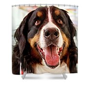 Burmese Mountain Dog Shower Curtain